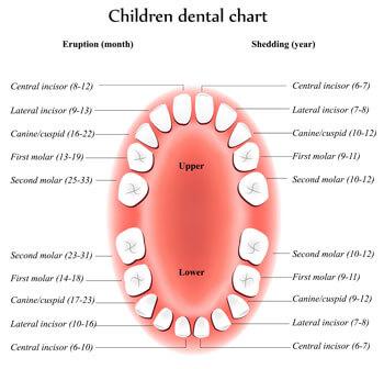 Tooth Eruption Chart - Pediatric Dentist in Highlands Ranch, CO
